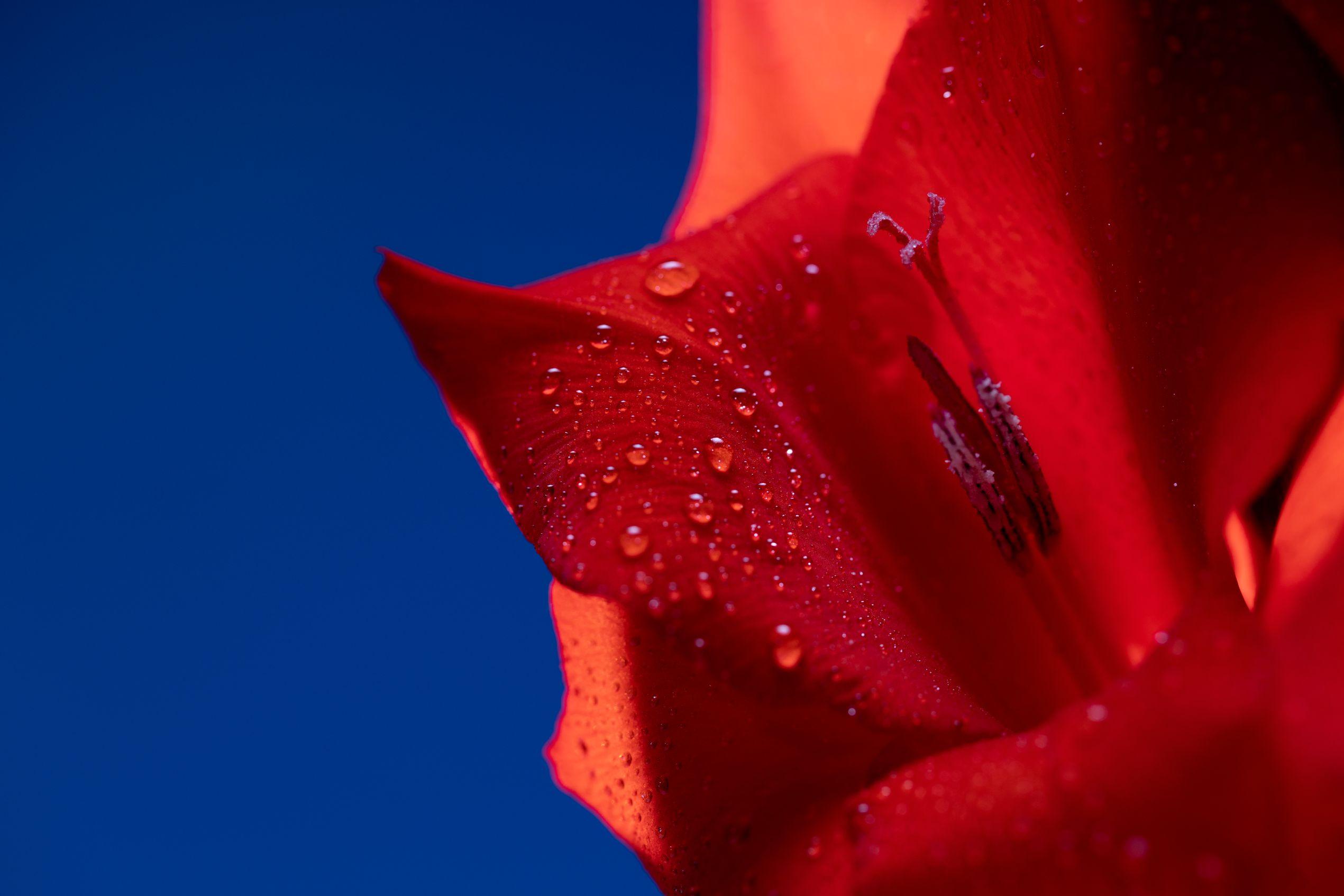 Cursussen bint voor welzijn ondersteuning for Bruiloft versiering zelf maken